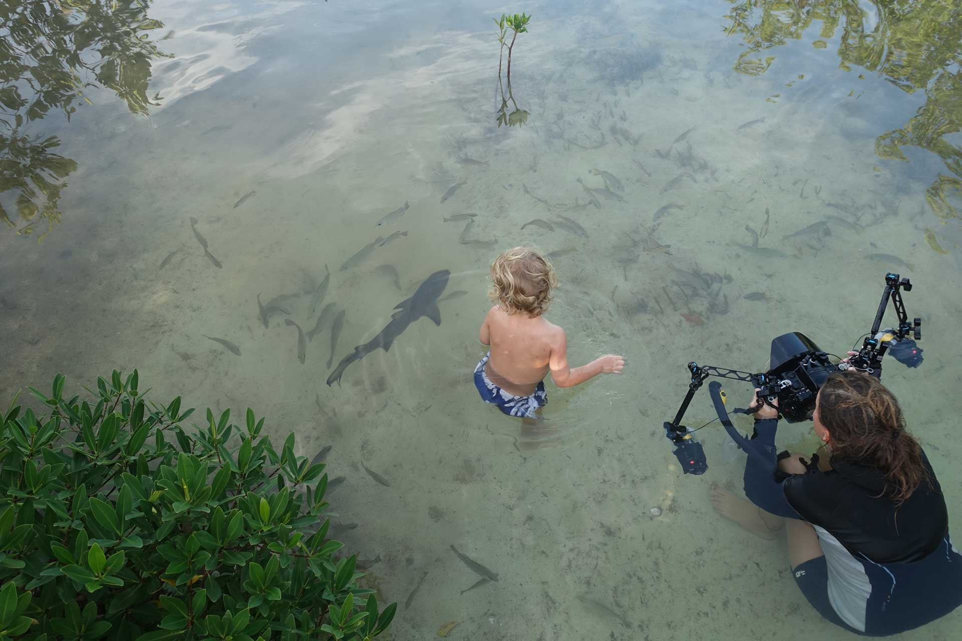 Charlotte Sams photographing 3-year old Elliot playing with juvenile Lemon Sharks in Aya's Spot. Photo by Duncan Brake - oceanicallstars.com