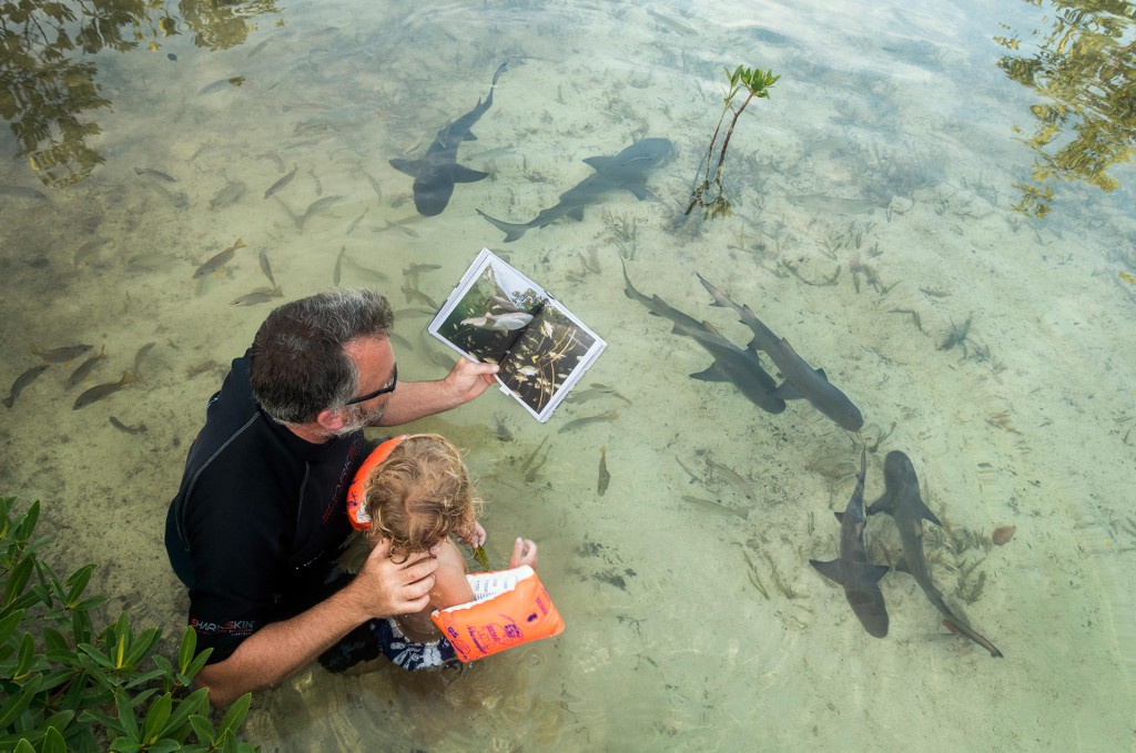 Michael Scholl with his 3-year old son reading the Shark Doc, Shark Lab book in Aya's Spot and juvenile Lemon Sharks. Photo by Duncan Brake - oceanicallstars.com