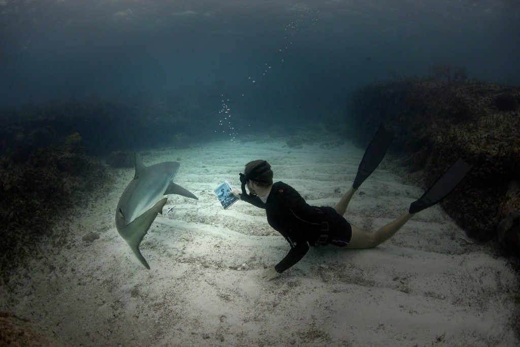 Chris shows off book to Caribbean Reef Shark Photo by Charlotte Sams © Bimini Biological Field Station Foundation Copyright 2016